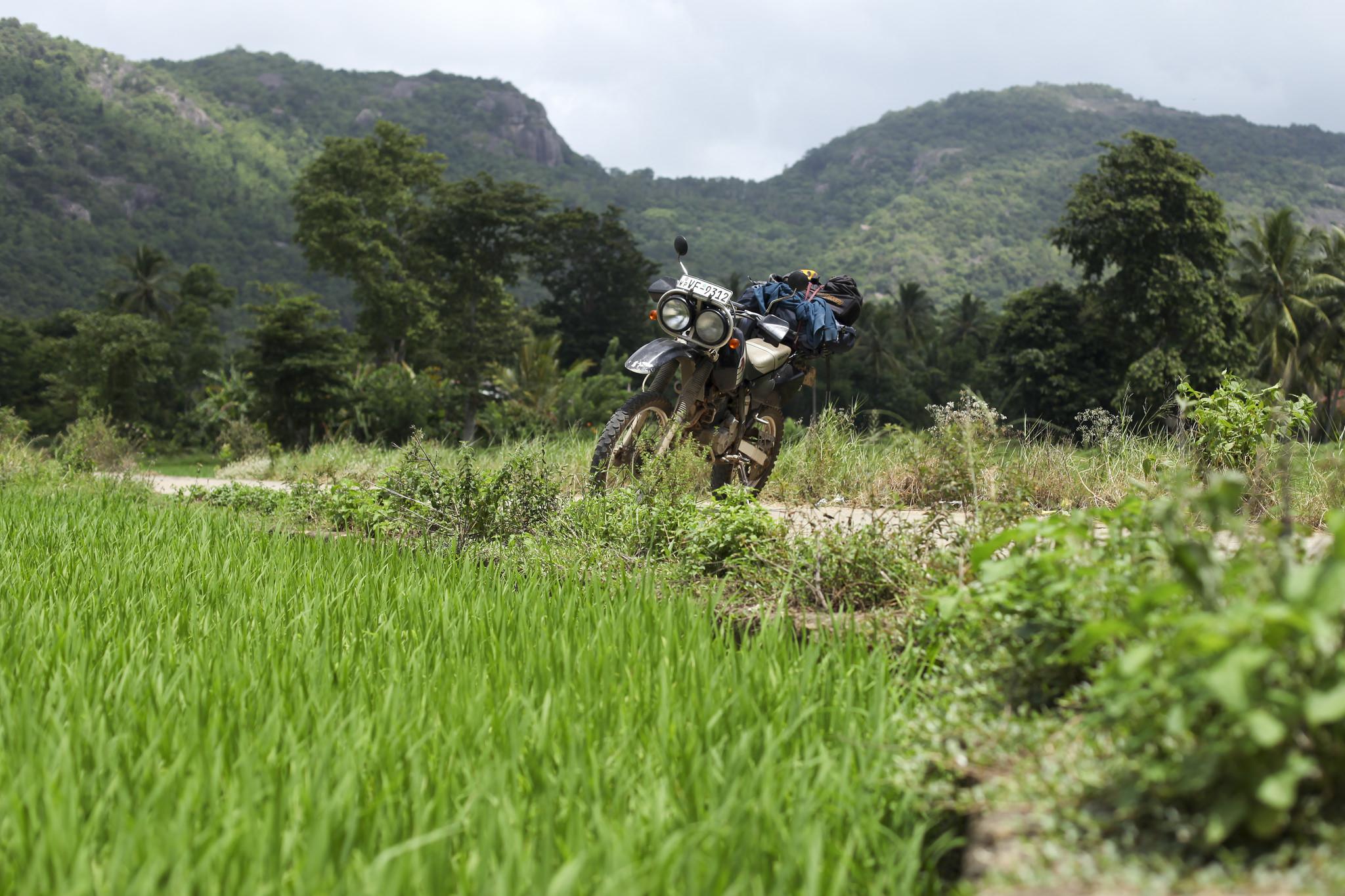 motorycle-paddyfield-srilanka
