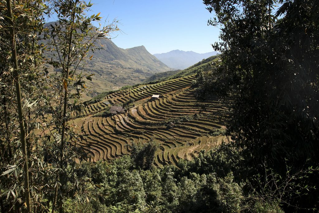 terrasses-riz-cascade