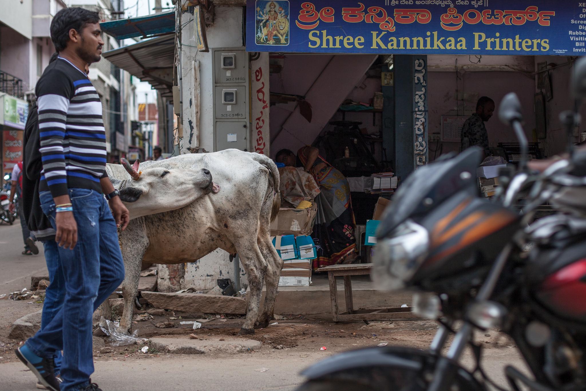 Street life in Mysore